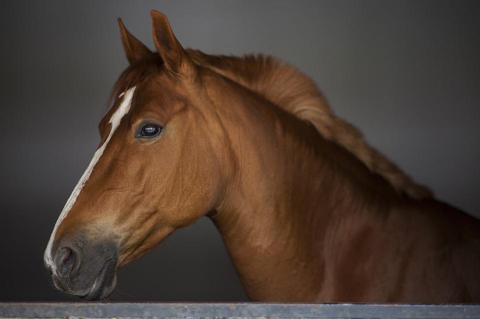Pferde Rehabilitation in Hannover